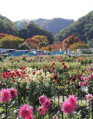 ◆黒川ダリア園へ行ってきました_e0154682_23483493.jpg