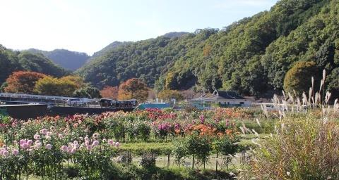 ◆黒川ダリア園へ行ってきました_e0154682_23520239.jpg