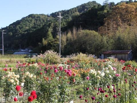 ◆黒川ダリア園へ行ってきました_e0154682_23544597.jpg