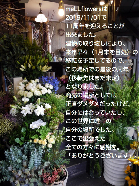 meLLflowersは2019/11/01で11周年を迎えることが出来ました。_b0171193_23383408.jpeg