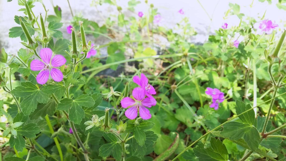 11月3日 ピンクの小花。_a0204408_15215543.jpg
