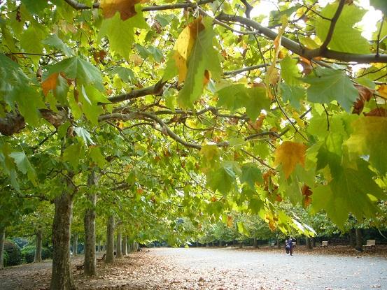 秋の風景@新宿御苑_c0192215_192091.jpg