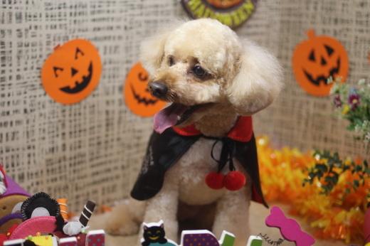 10月31日ご来店のワンちゃんです!!_b0130018_09230862.jpg