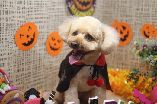 10月31日ご来店のワンちゃんです!!_b0130018_09231180.jpg