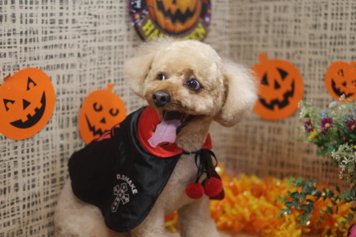 10月31日ご来店のワンちゃんです!!_b0130018_09234054.jpg