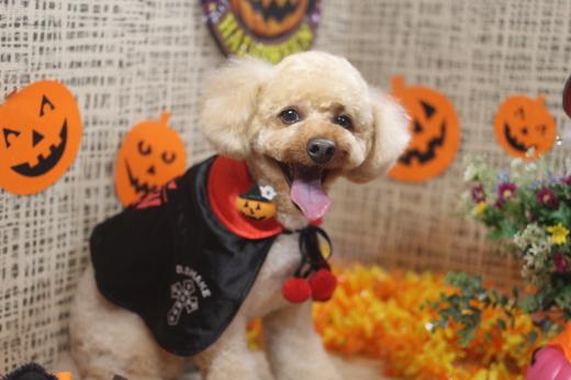 10月31日ご来店のワンちゃんです!!_b0130018_09234646.jpg