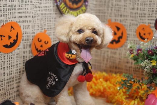 10月31日ご来店のワンちゃんです!!_b0130018_09234769.jpg