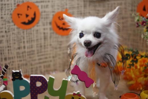 10月31日ご来店のワンちゃんです!!_b0130018_09261589.jpg