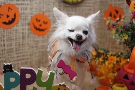 10月31日ご来店のワンちゃんです!!_b0130018_09265065.jpg