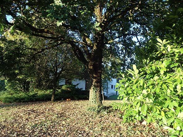 知人の植物園_c0177135_00015884.jpg