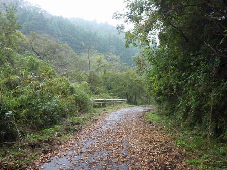 文化の日、曇のち小雨。秋もよう。_a0123836_17152979.jpg