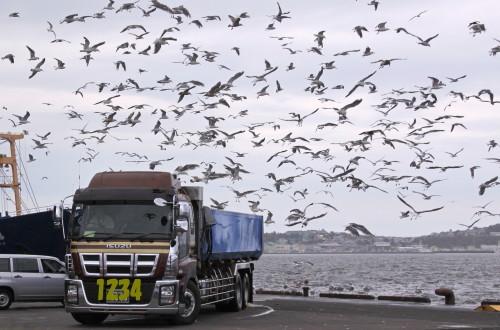 オリンピックマラソン釧路っていうのは・・。11月3日_f0113639_15021692.jpg