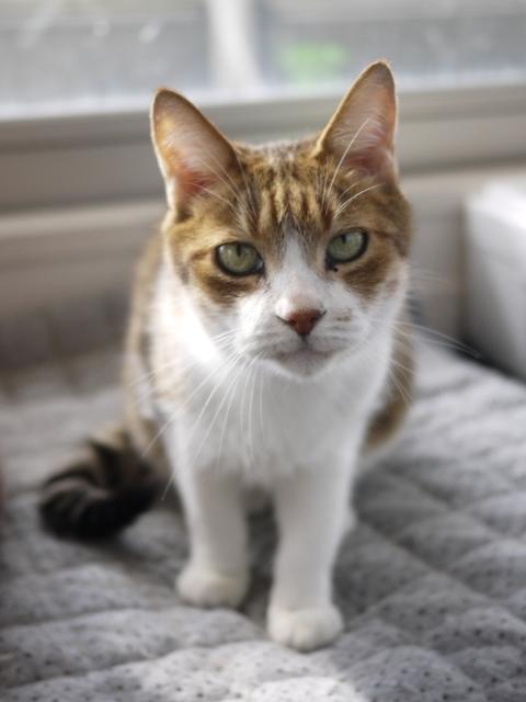 猫のお留守番 ウィンクくん編。_a0143140_22262567.jpg