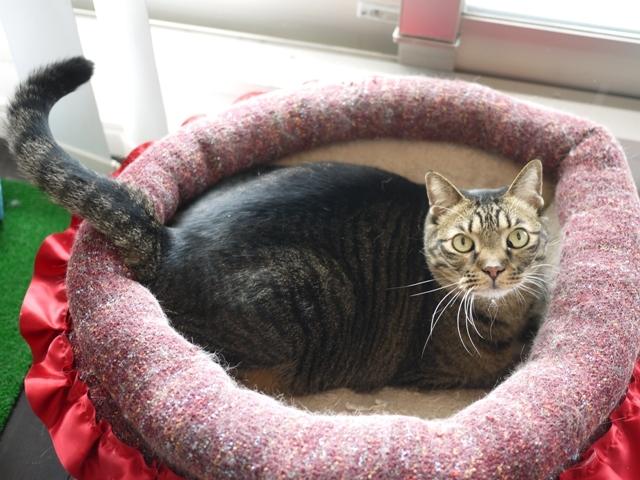 猫のお留守番 ララちゃん編。_a0143140_22282126.jpg