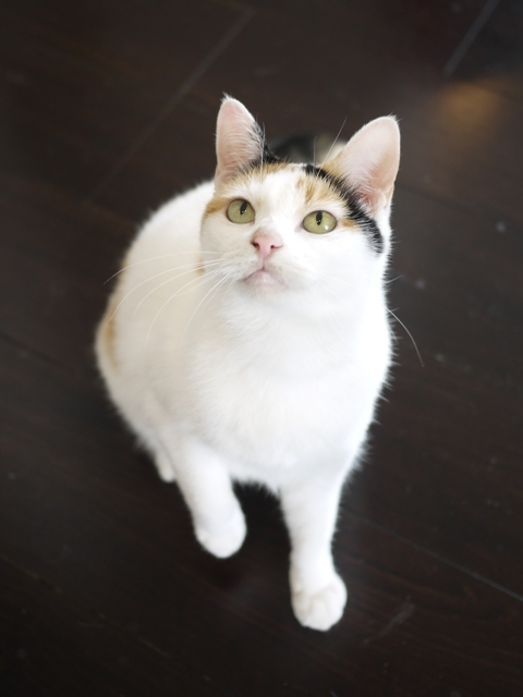 猫のお留守番 エンジェルちゃん編。_a0143140_22322860.jpg