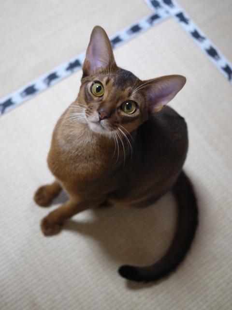 猫のお留守番 周平くん編。_a0143140_22401644.jpg
