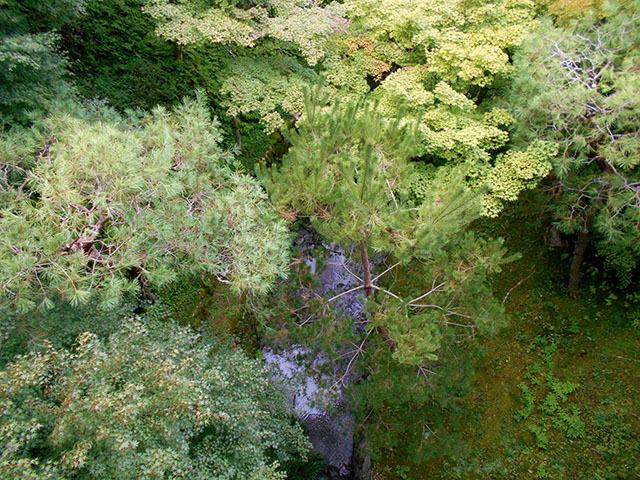 京都・東福寺(10月21日 月 2019年)_a0099744_13363309.jpg