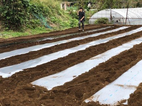 今朝は3人体制 畝を6本一気に作りました 蚕豆 エンドウ豆 スナップエンドウ 蕪 ほうれん草の畝です_c0222448_11564202.jpg