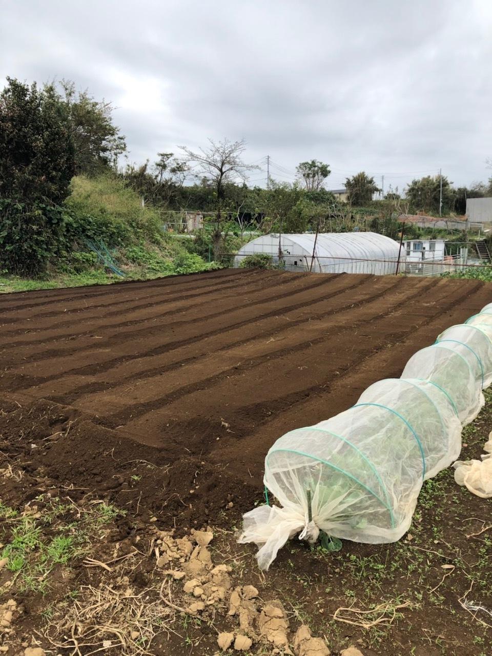 今朝は3人体制 畝を6本一気に作りました 蚕豆 エンドウ豆 スナップエンドウ 蕪 ほうれん草の畝です_c0222448_11573701.jpg