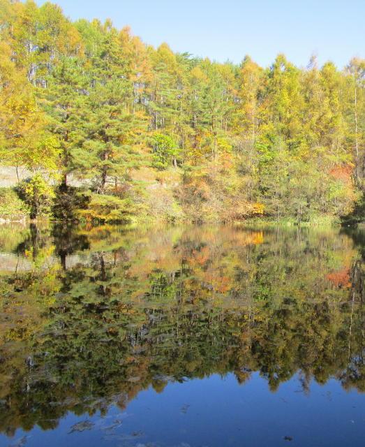 チェルトの森、池めぐり_e0136049_11571716.jpg