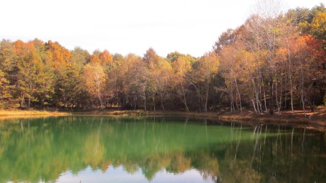 チェルトの森、池めぐり_e0136049_1157622.jpg