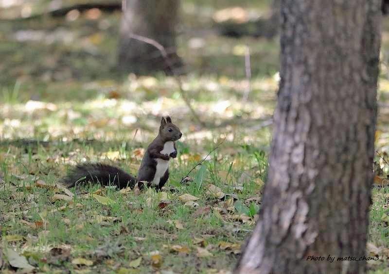 エゾリス Hokkaido Squirrel_c0070654_19552480.jpg