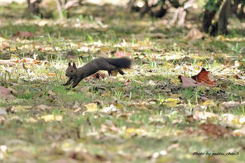 エゾリス Hokkaido Squirrel_c0070654_19553801.jpg