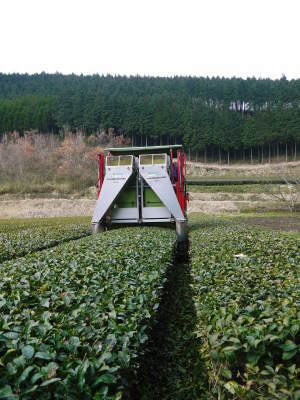菊池水源茶 ティパック入り煎茶「オフィスティー」販売開始!_a0254656_17281616.jpg