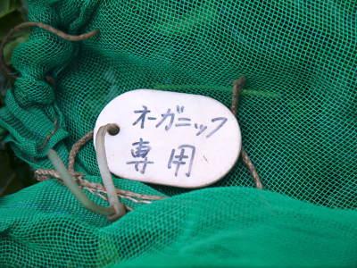 菊池水源茶 ティパック入り煎茶「オフィスティー」販売開始!_a0254656_17413184.jpg