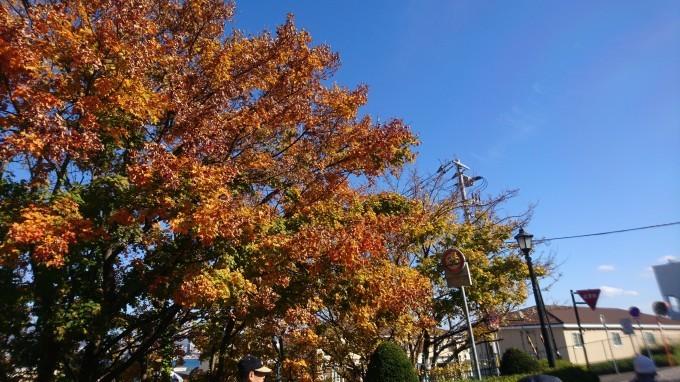 函館元町の紅葉_b0106766_16260648.jpg