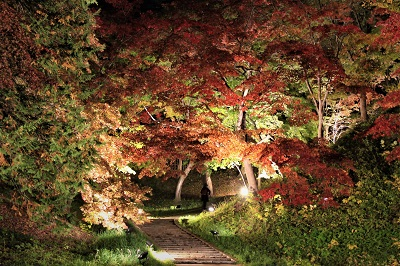 弘前城菊と紅葉まつりライトアップ_2019.11.01_d0131668_10585899.jpg