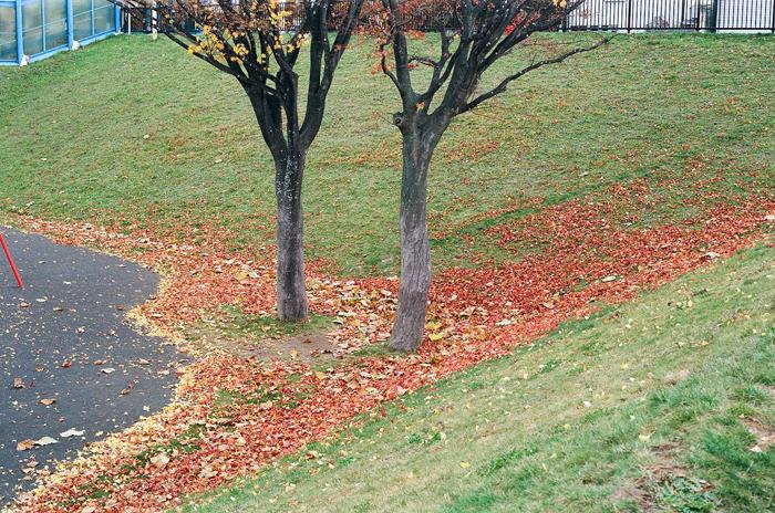 カエデの落葉と頑張るイチョウのある三角屋根の家_c0182775_1724416.jpg