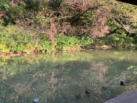 自宅から歩いて近い、久良岐公園を散策しました。_a0112393_14443221.jpg