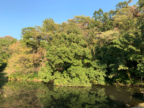 自宅から歩いて近い、久良岐公園を散策しました。_a0112393_14443707.jpg