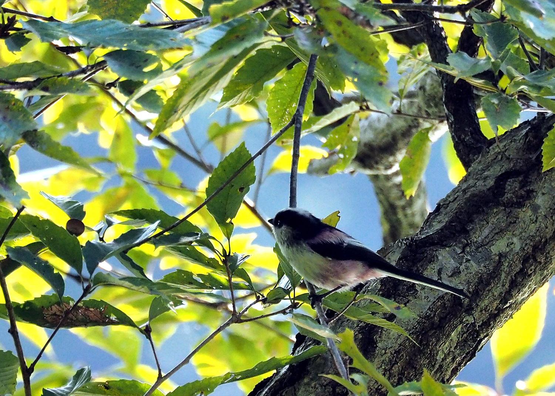 鳥_e0254493_10173720.jpg