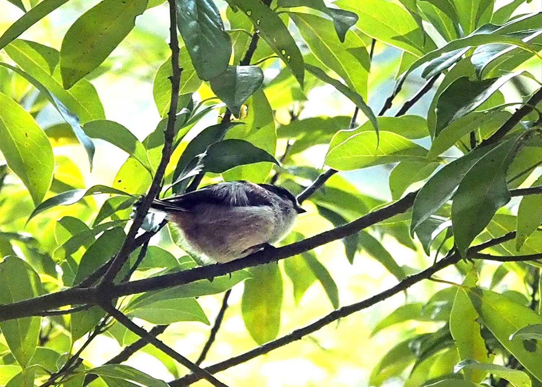 鳥_e0254493_10193041.jpg