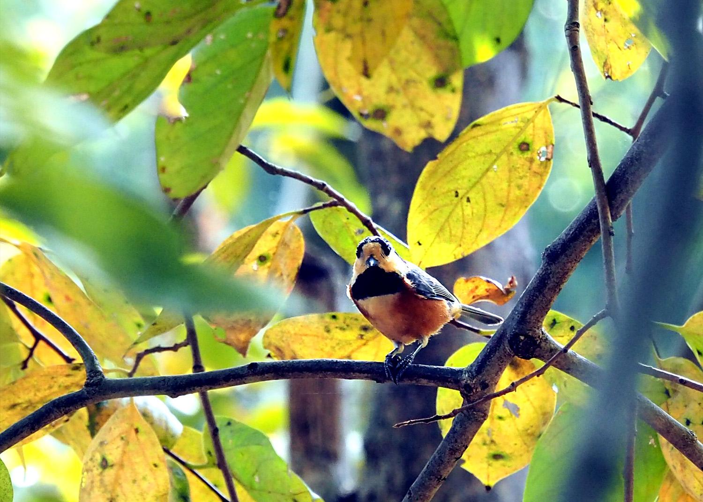 鳥_e0254493_10195036.jpg