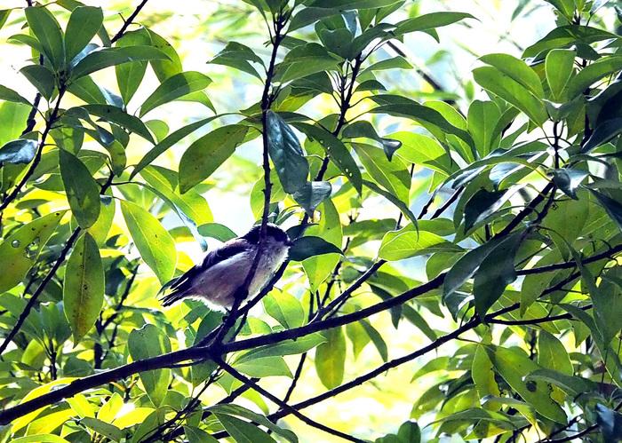 鳥_e0254493_101974.jpg