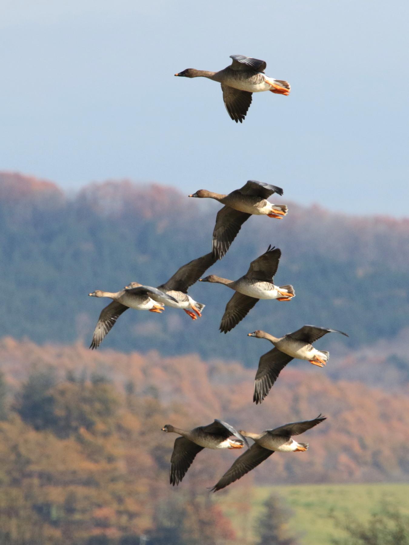 MFの渡り鳥たち_c0360399_21041126.jpg