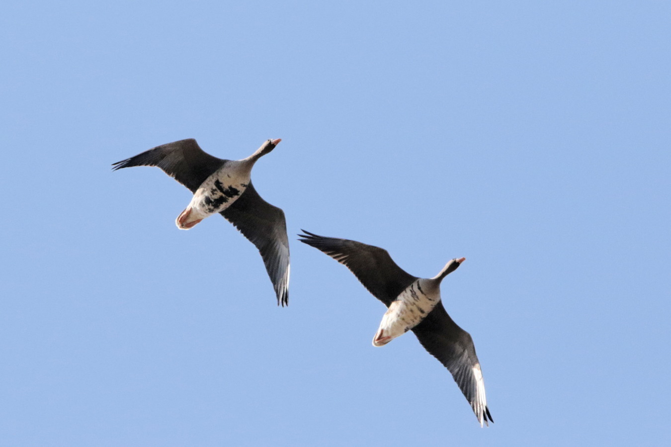 MFの渡り鳥たち_c0360399_21064569.jpg