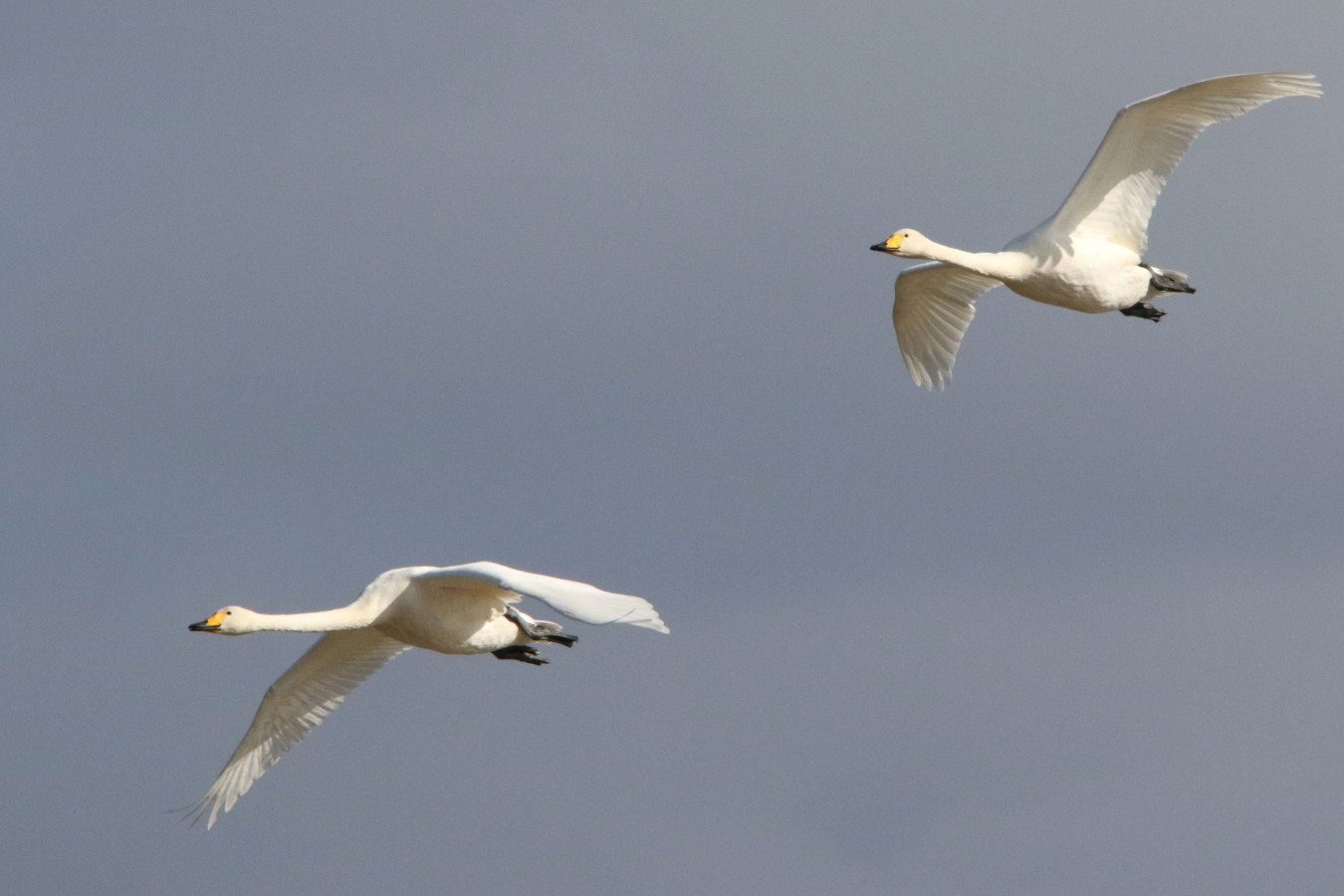 MFの渡り鳥たち_c0360399_21071568.jpg