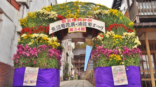 菊まつり 境内では「ねこかき」が行われていました_c0336902_16224539.jpg