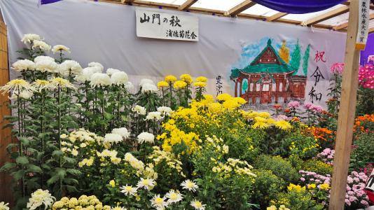 菊まつり 境内では「ねこかき」が行われていました_c0336902_16225460.jpg