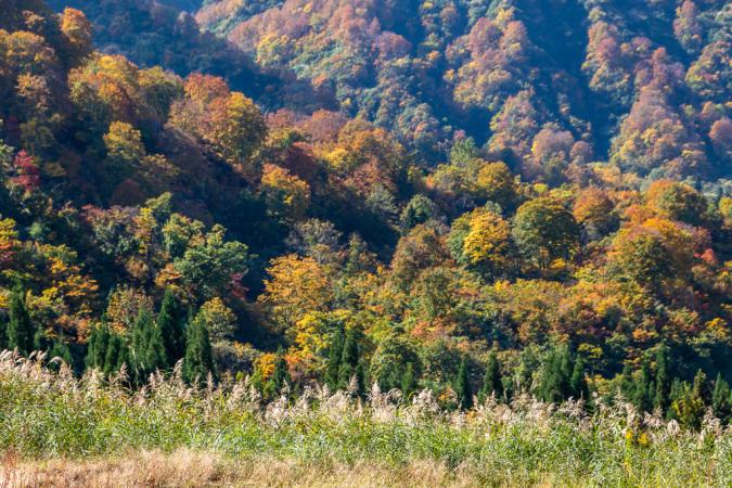 松之山の秋_b0010915_11595710.jpg