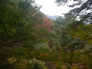 国見岳…尾西谷右俣と左岸尾根_c0359615_23055591.jpg