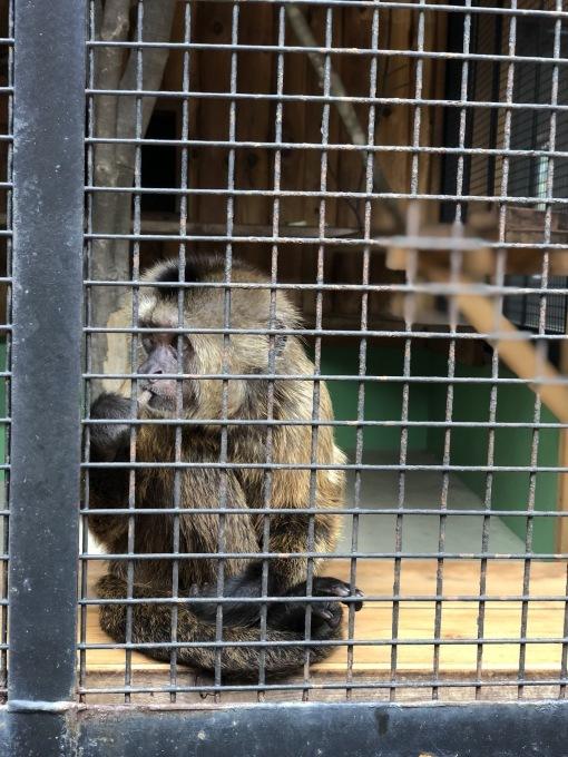 動物園_e0149215_14230020.jpeg