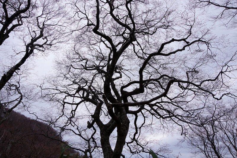 福井の荒島岳!_a0165316_20032458.jpg