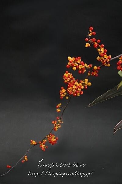 定期装花から ツルウメモドキ_a0085317_19493207.jpg