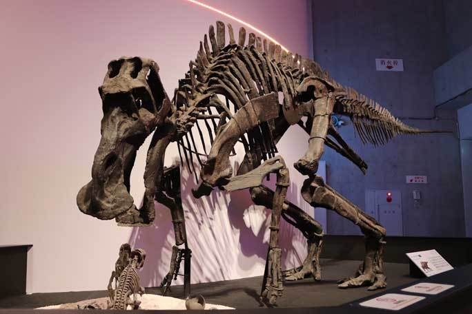恐竜博2019~マイアサウラ_b0355317_21290543.jpg