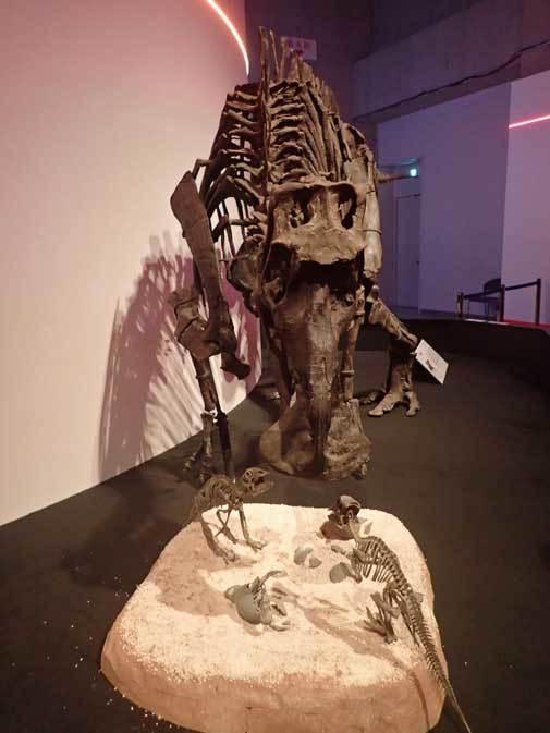 恐竜博2019~マイアサウラ_b0355317_21384017.jpg